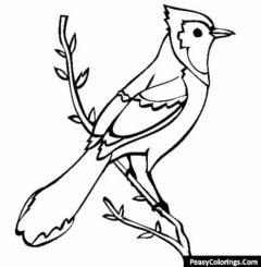 Blue jay on tree branch coloring pages