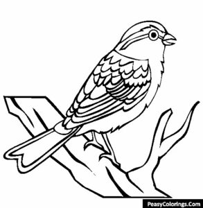 chipping sparrow coloring sheet and page