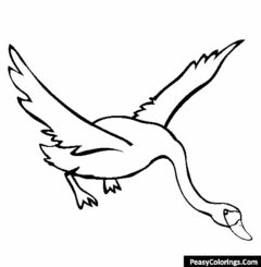 swans coloring pages