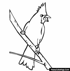 nothern cardinal on tree branch coloring page