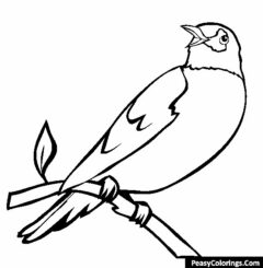 robin on the tree branch coloring page