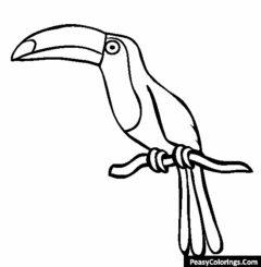 taucan on the tree branch coloring page