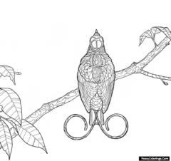 birds of paradise coloring pages