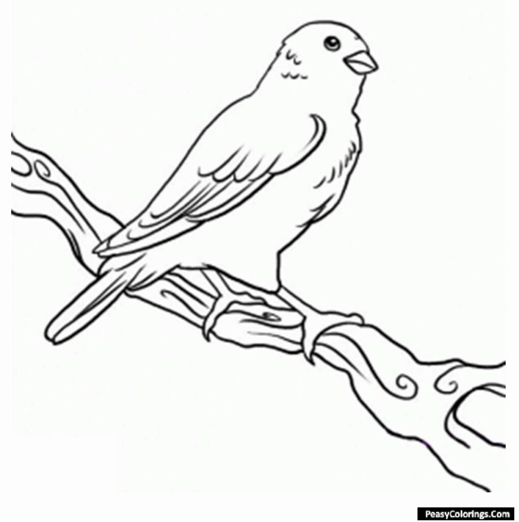 canary coloring pages
