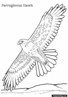hawjk coloring pages