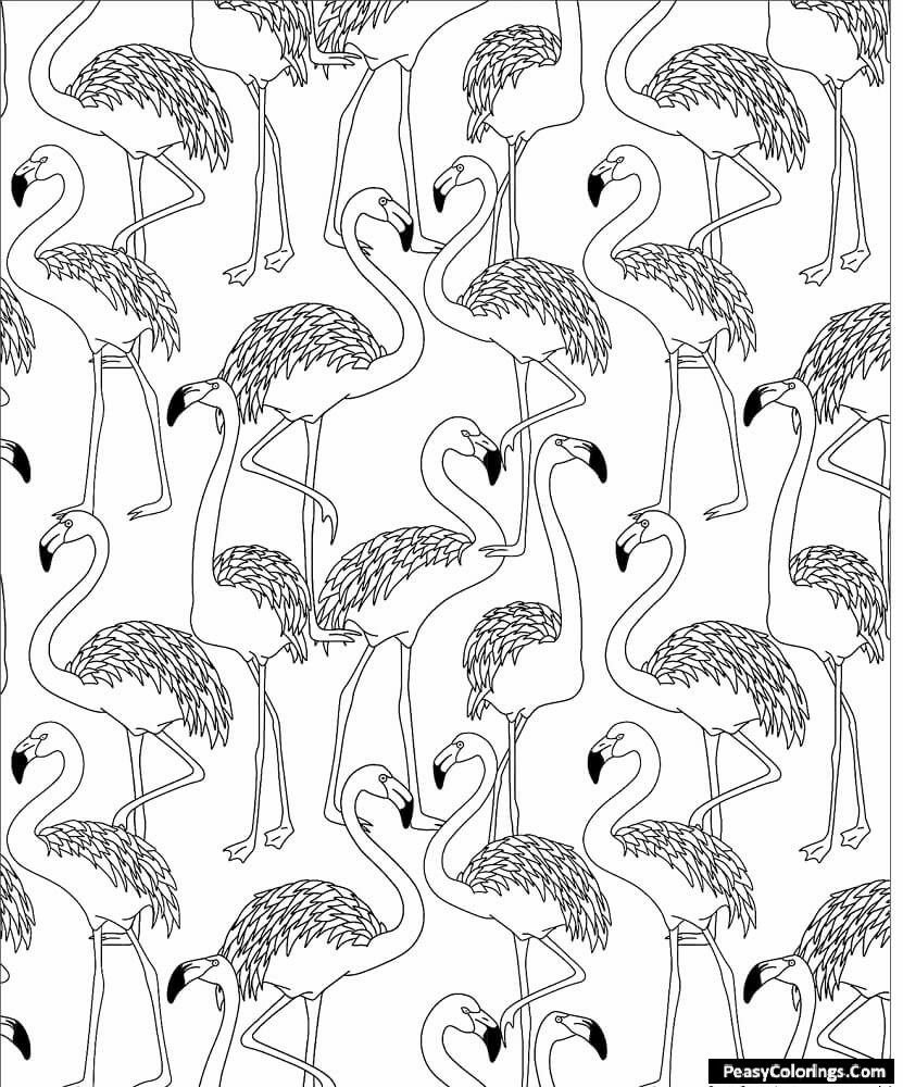 Flamingo herd coloring pages