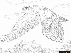 flying hawk coloring pages