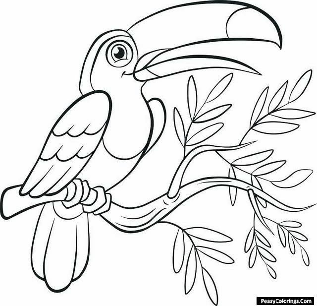 fun toucan coloring pages