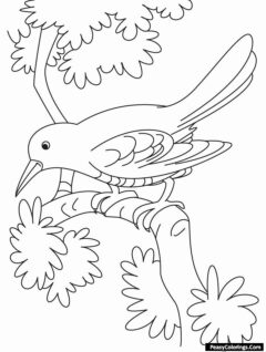 humming bird on leaves coloring pages