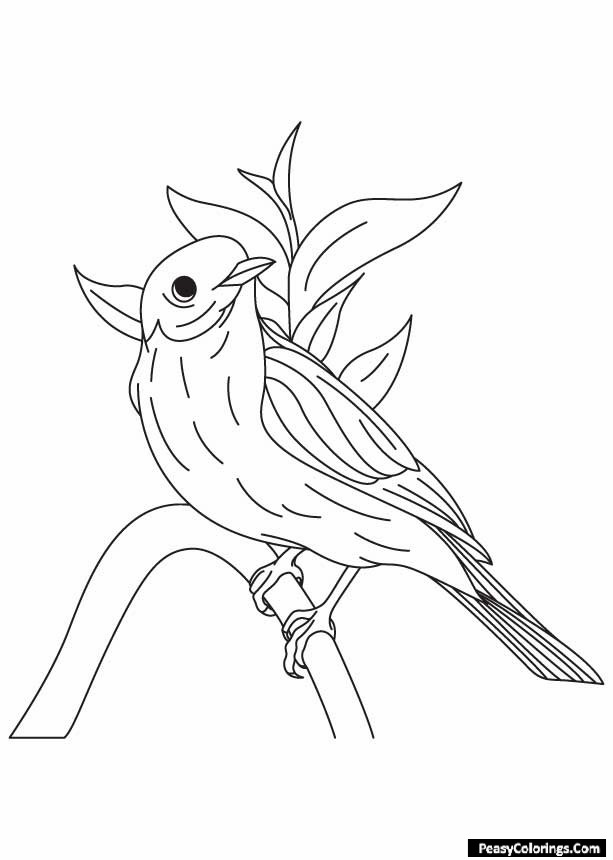 humming bird sitting on a stick coloring pages