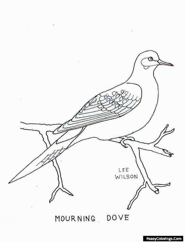 mourning dove coloring pages
