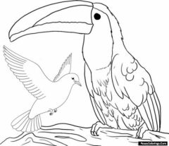 toucan and pigeon coloring pages