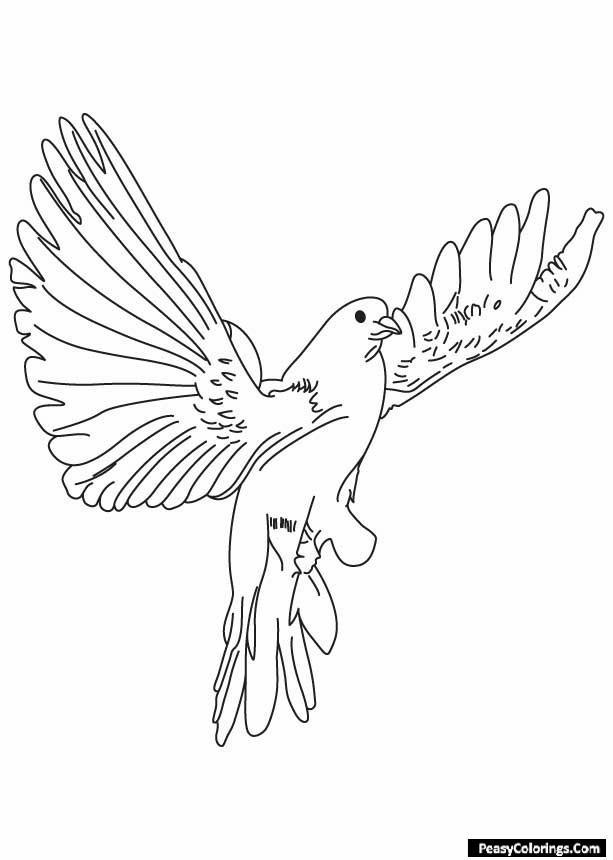 segmented dove coloring pages