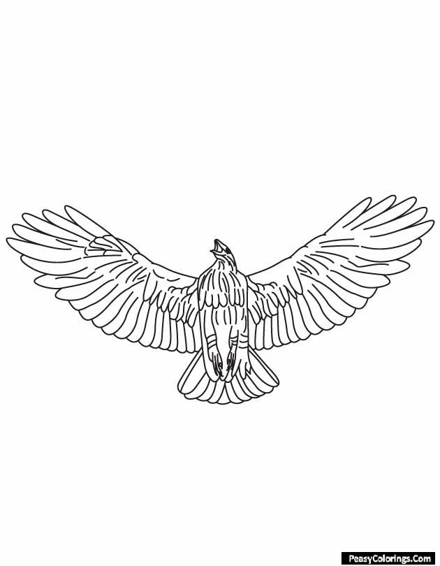 segmented hawk coloring pages