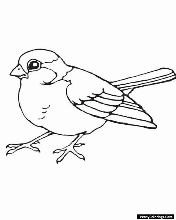 robin coloring pages