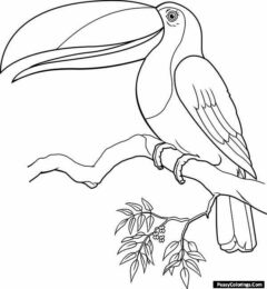 toucan coloring pages
