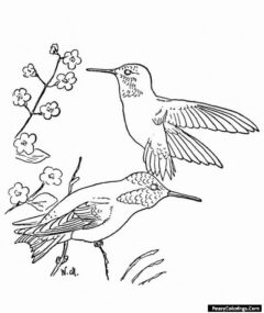 two humming birds