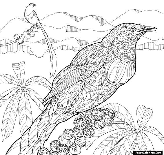 two birds of paradise coloring pages