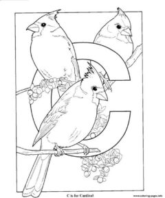 alphabet-letter-C-for-cardinal-coloring page