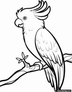 cockatoos coloring pages