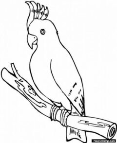 cockatoos on a branch coloring page