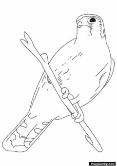 hawk sitting on a branch coloring page