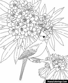 north cardinal around blossom flowers coloring page