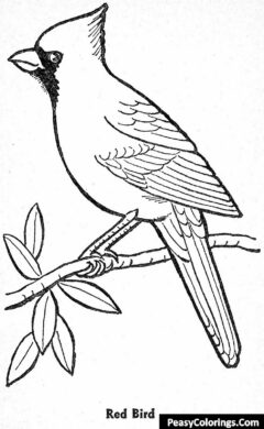 red cardinal bird on tree branch coloring page