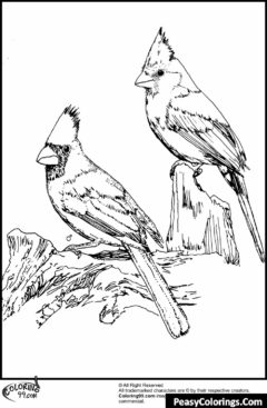 two cardinals sitting on branch coloring page