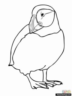 puffin coloring page