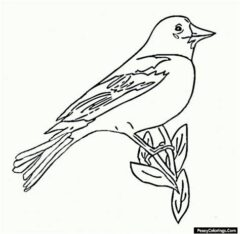 oriole coloring page