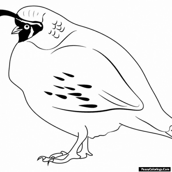 quail coloring page